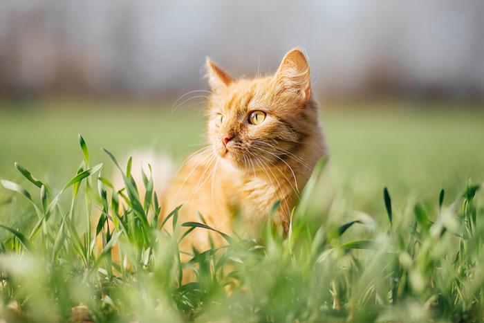 Für Katzenfreunde: Unsere Katzenwelt