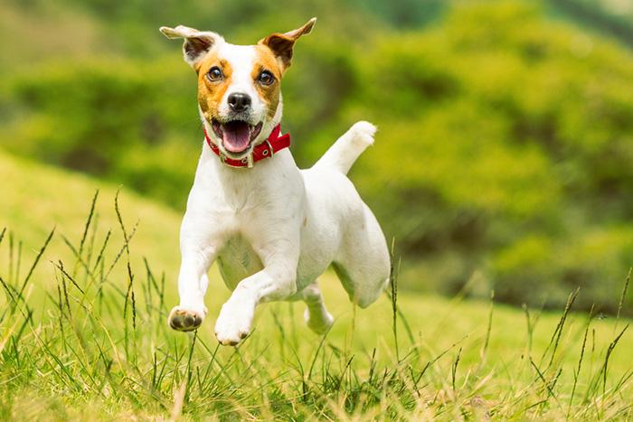 Für Herrchen und Frauchen: Unsere Hundewelt