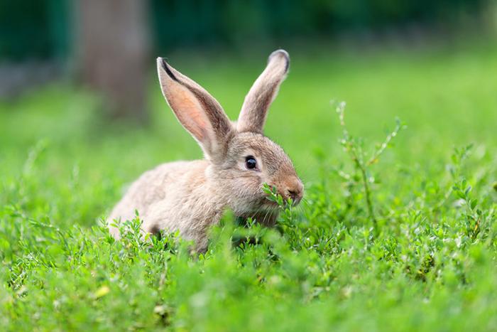 Für Nagerhalter: Unsere Kleintierwelt